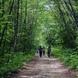 이곳이 최초의 국가지정명품 숲길!